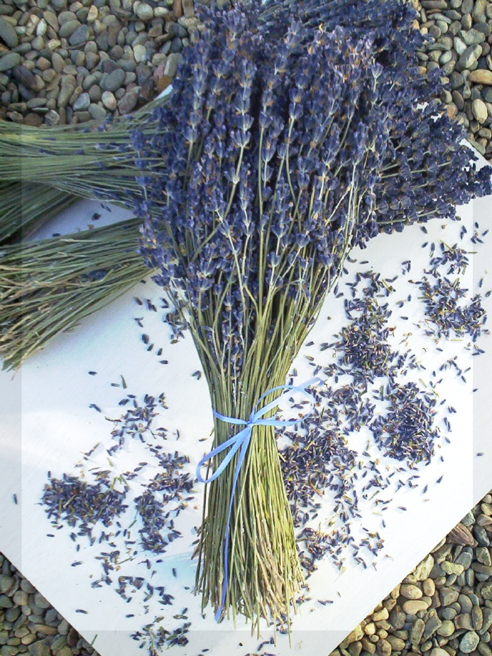 French Lavender bunches by Lavender Fanatic bouquets.