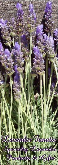 Lavender aromatherapy and lavender gifts by Lavender Fanatic specialty products.