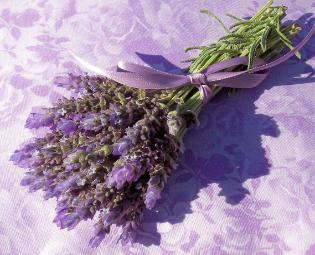 Lavender aromatherapy uses and benefits by Lavender Fanatic.