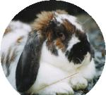 Help us help real bunnies in need at Lavender Fanatic.